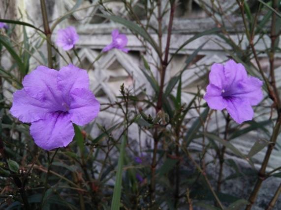 012_flower_01