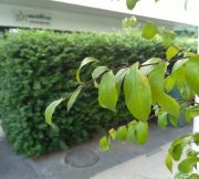 Simple-Photo-from-Huawei-GR5-SpecPhone-00024