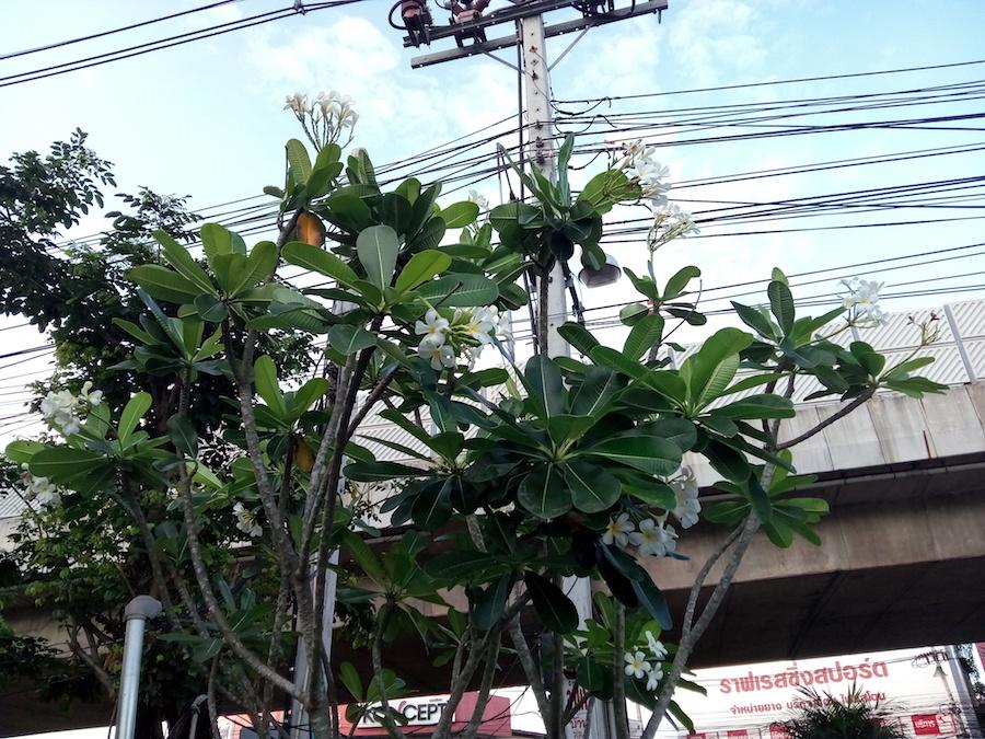Simple Photos Alcatel Flash Plus 2 SpecPhone 00015
