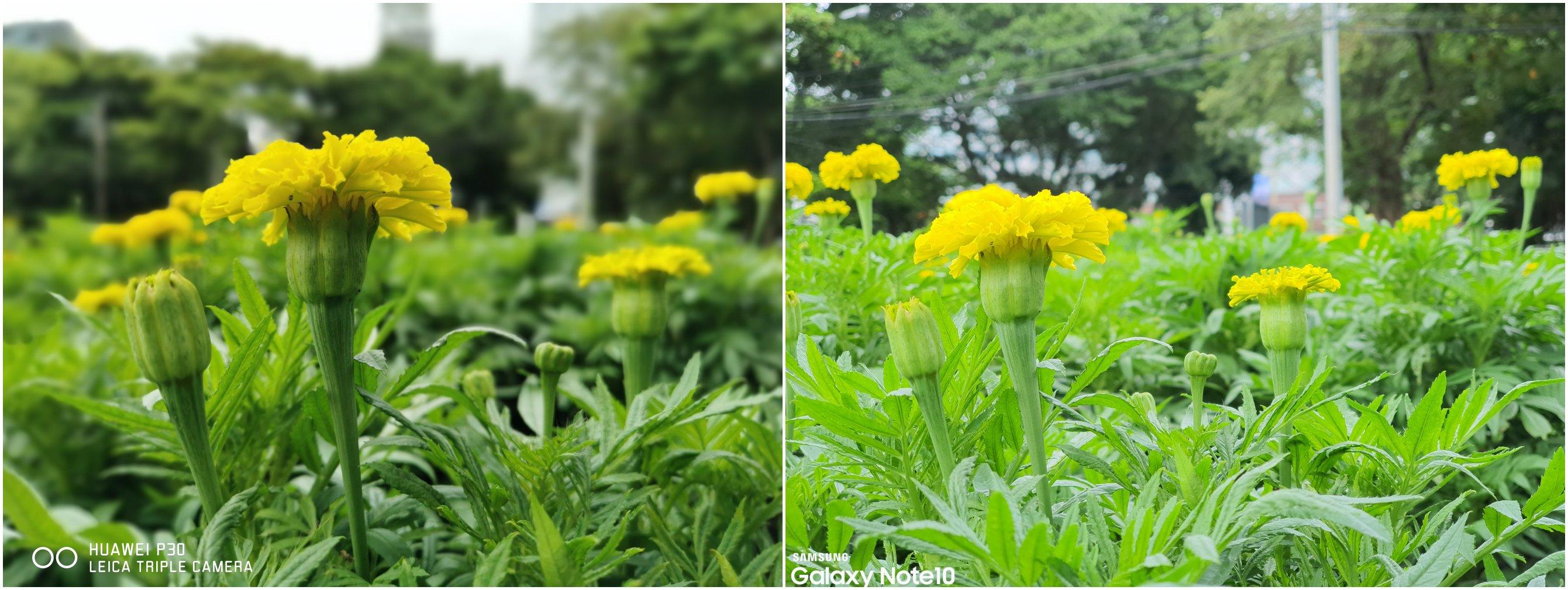 Camera Battle Galaxy Note 10 vs HUAWEI P30 SpecPhone 0006