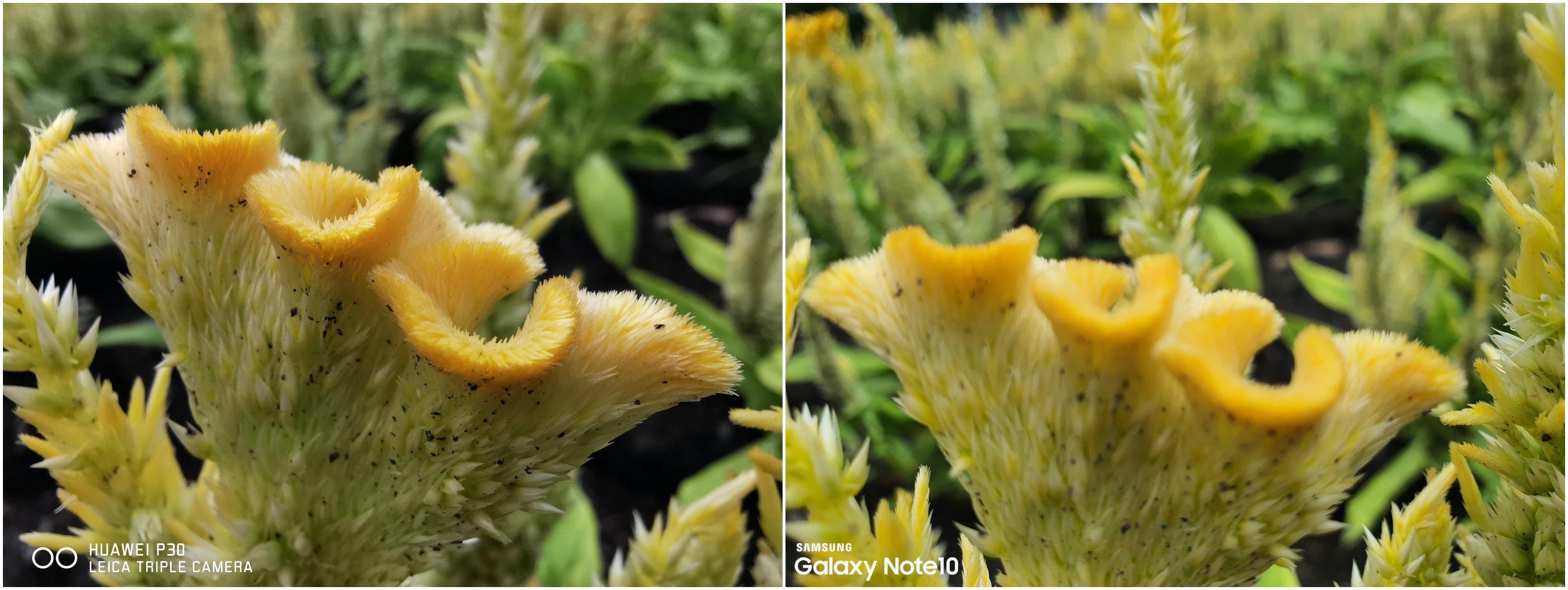 Camera Battle Galaxy Note 10 vs HUAWEI P30 SpecPhone 0008