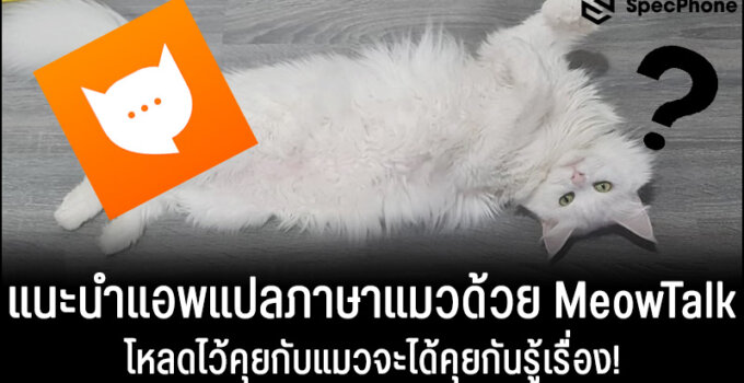 แนะนำแอพแปลภาษาแมวด้วย MeowTalk โหลดไว้คุยกับแมวจะได้คุยกันรู้เรื่อง!
